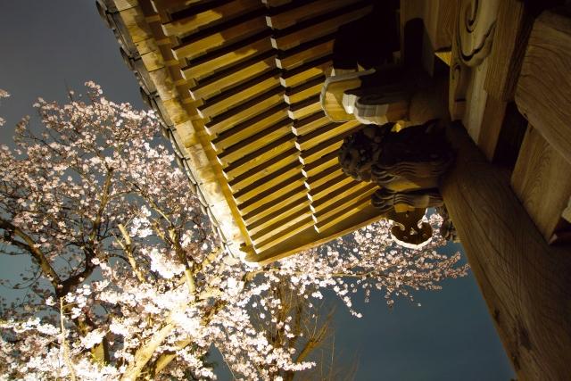 キレイな夜桜