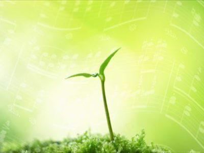 新芽が芽吹く生命の力強さ