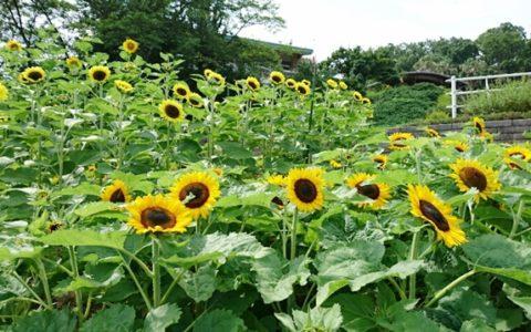 和歌山県緑化センターには四季折々で楽しめる花がたくさん咲いています。