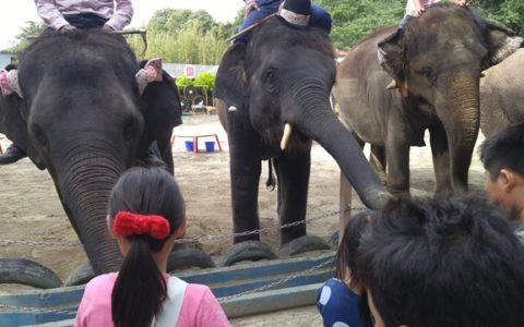 市原ぞうの国は本物の象さんに乗って楽しめます。